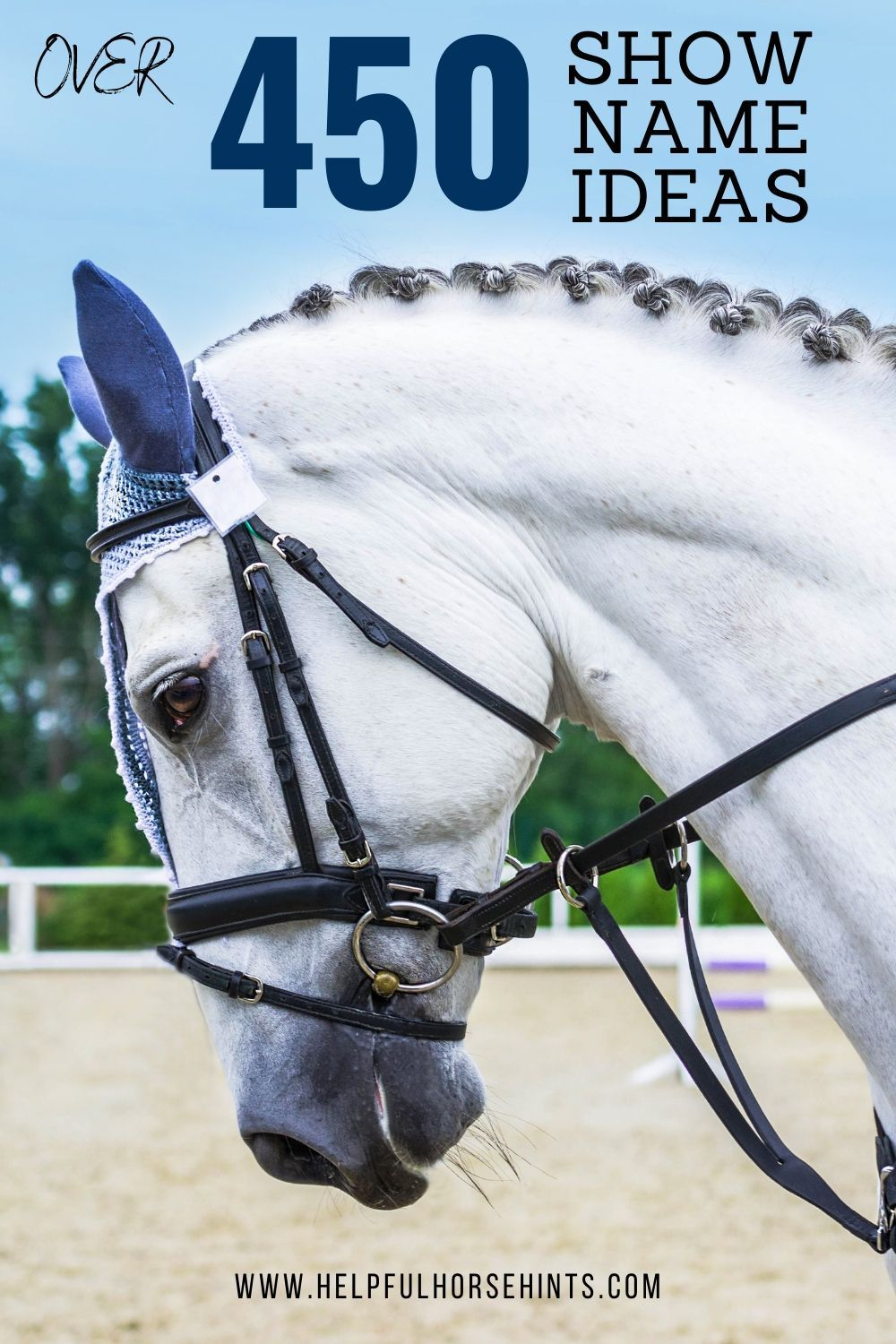 481 Show Name Ideas For Your Horse Horse Show Names Horses Show Horses