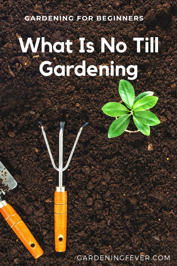 What Is No Till Gardening Explained (Beginner Friendly is part of No till garden, Gardening for beginners, Organic gardening, Garden soil, Garden help, Garden - What Is No Till Gardening  In this post we explain the Pro's and Cons of wheater or not this transition might be practical for your gardening needs