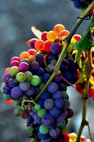 Rainbow grapes?! COOL