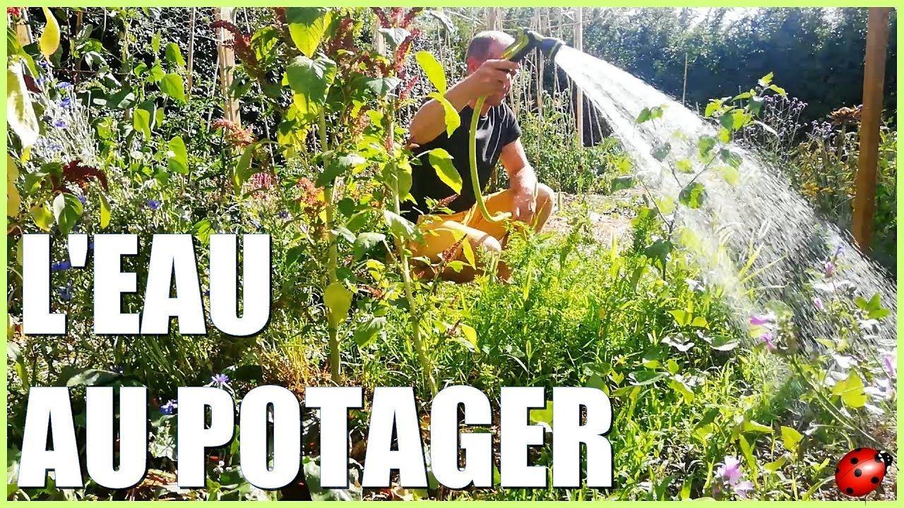 Bien Arroser Son Potager Potager Jardinage Bio Agroecologie
