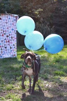 Gender Reveal Ideas With Dogs Google Search Babygendertips Ect