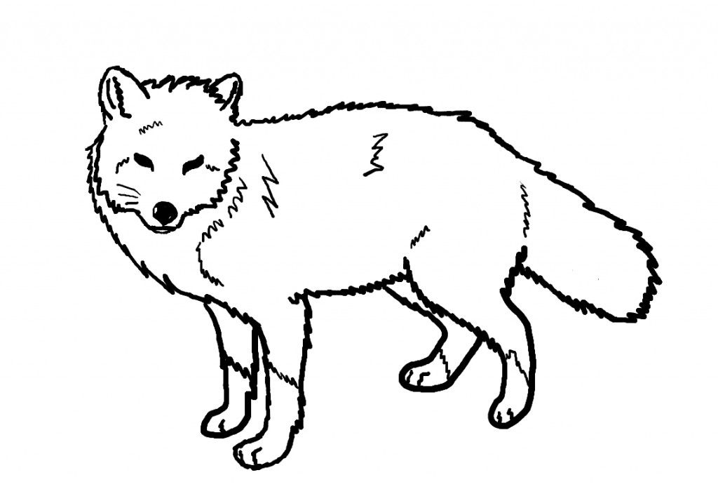 Fox Coloring Pages to Print coloring Pinterest Foxes and Free - best of coloring pages to print animals