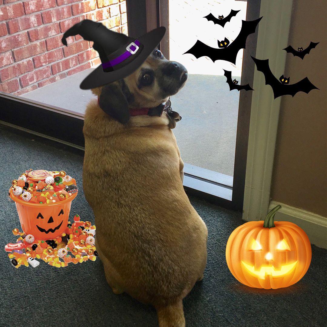 Max is wishing everyone a Happy Halloween! happyhalloween