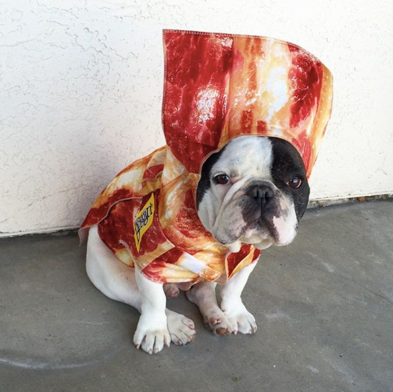 Dog · Bacon & 14 Foodie Costumes for Your Pet | Dog