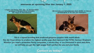 Advertisements Puppies For Sale Dogs For Sale In 2020 Akita Puppies For Sale German Shepherd Puppies Shepherd Puppies