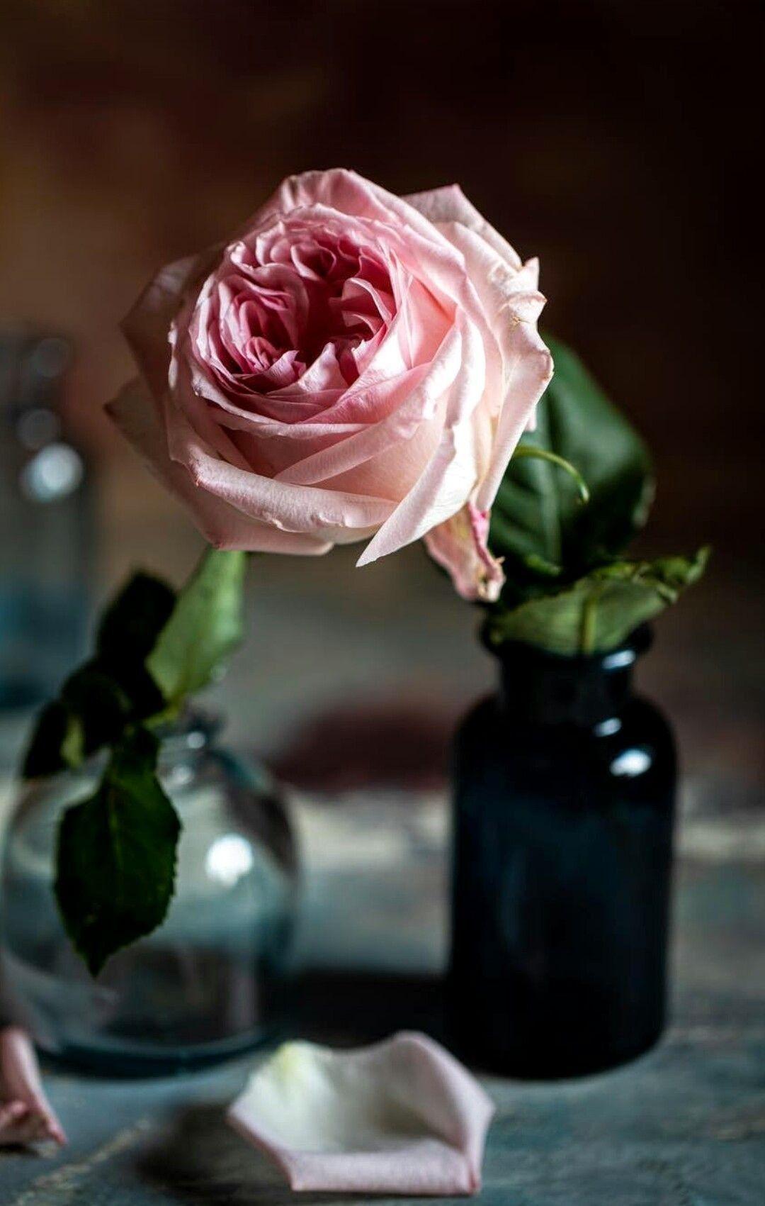 Pinterest Com Flowers Nature Flowers Beautiful Roses