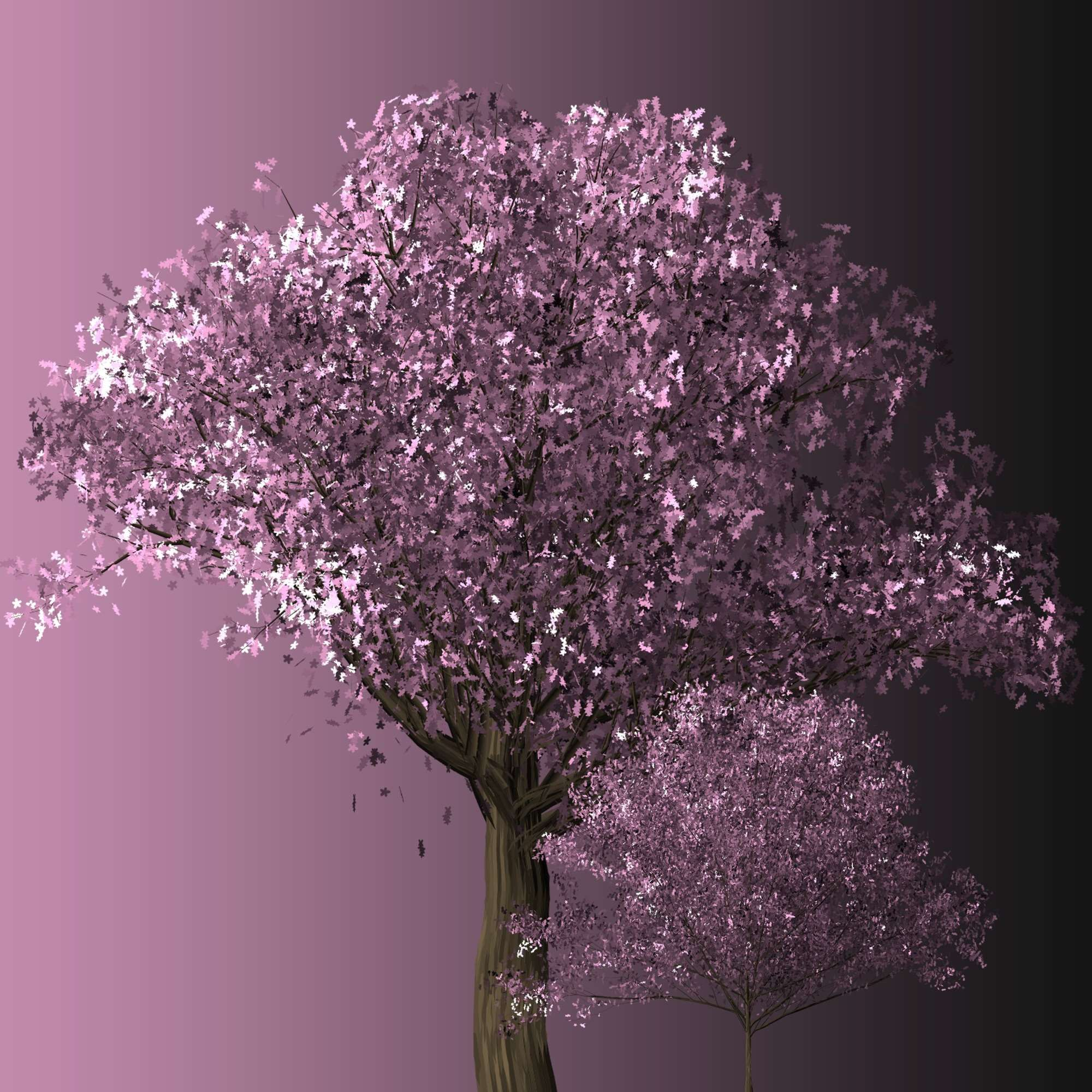 Background Bloom Blooming Blossom Blossoming Botanical Botany Branch Branches Bud Budding Cherry Ch Purple Trees Blossom Trees Cherry Blossom Tree