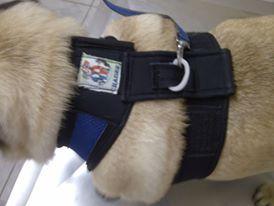 Guias feitas sob medida para Pets com padrões de tamanho especiais