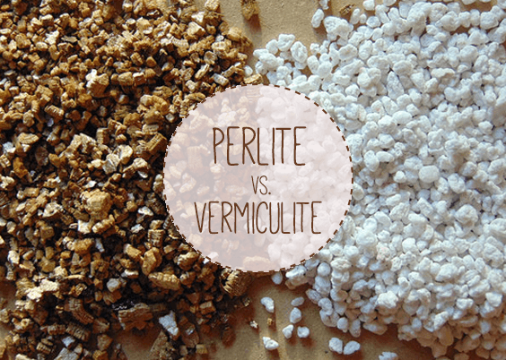 Is vermiculite or perlite a better addition to your potting mix? What about for hydroponics?. In this article I dig deep into the contenti ...564 x 402 png 180kB