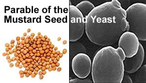 Matt. 13:31-35 ~ Parable of the Mustard Seed and Yeast