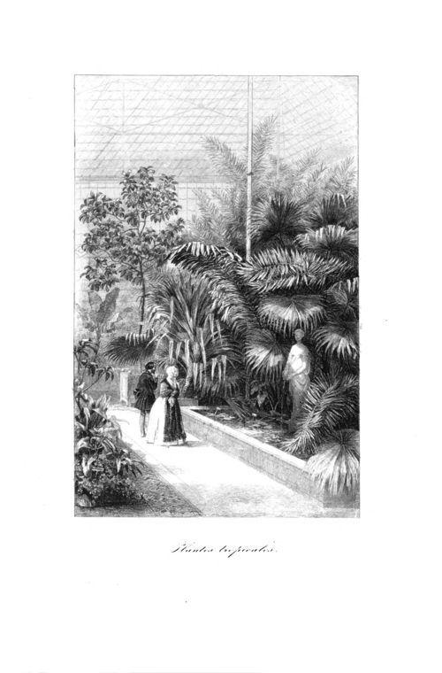 Botanique organographie et taxonomie par Emmanuel  Le Maout. #botanique