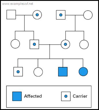 Autosomal Recessive Pedigree Chart Pedigree Chart Ap Biology Dna Genealogy
