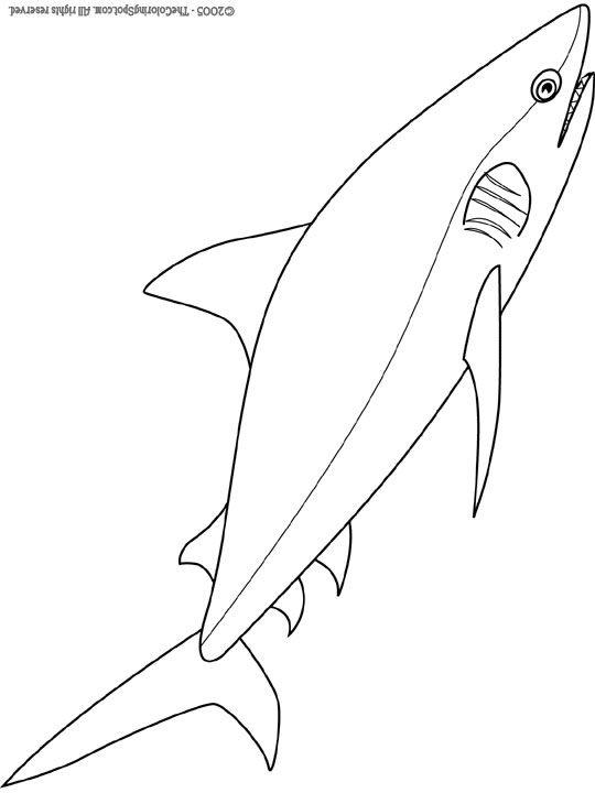 Bull Shark Coloring Pages Bull Shark Coloring Sheets Colouring In