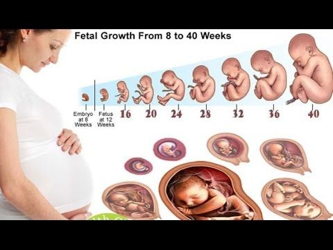 How Baby Grows In The Womb During Pregnancy How Twints