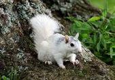 see more amazing albino animals here 21 amazing albino animals,  #Albino #albino... - #albinoanimales #albinoanimals