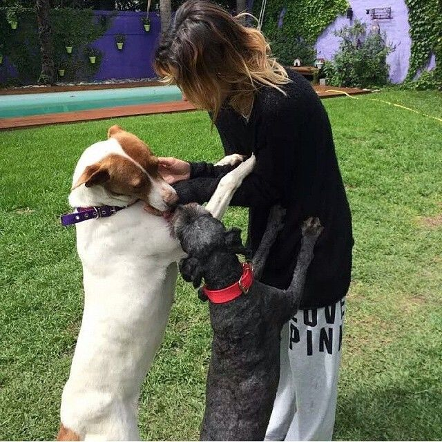 Tini Stoessel with two dogs!