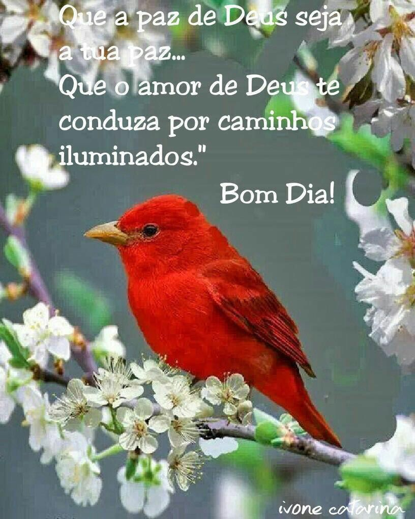 Que A Paz De Deus Seja A Tua Paz Que O Amor De Deus