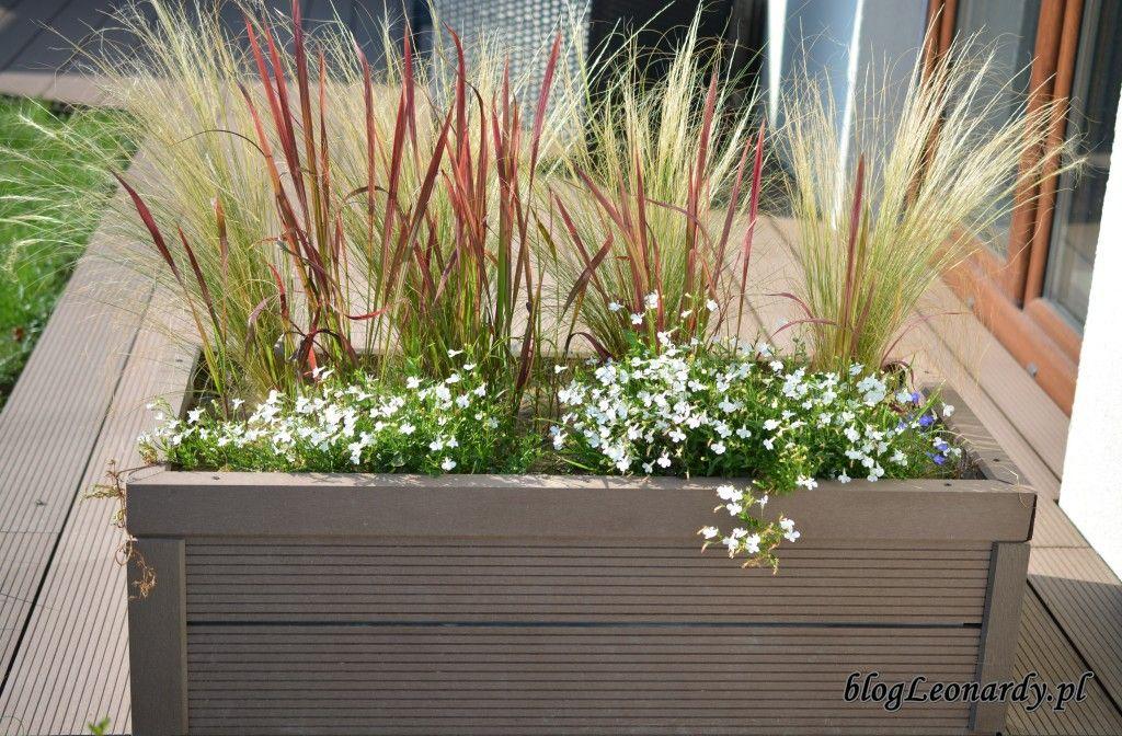 Kompozycje Tarasowe W Donicach Plants Plant Box Garden