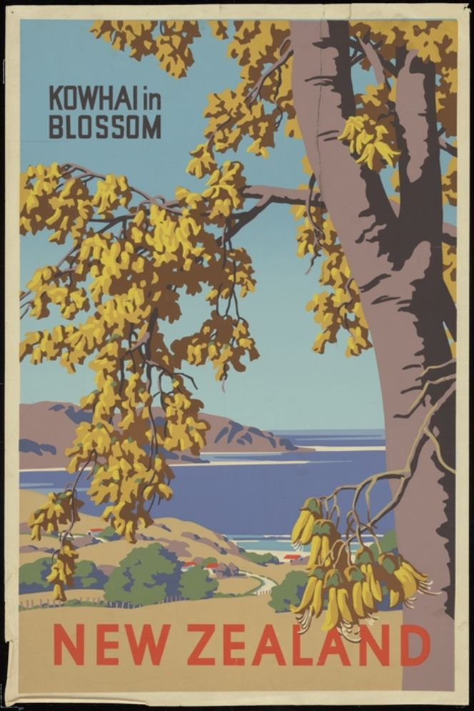[New Zealand Government Tourist Department] :New Zealand. Kowhai in blossom. [1940s?].