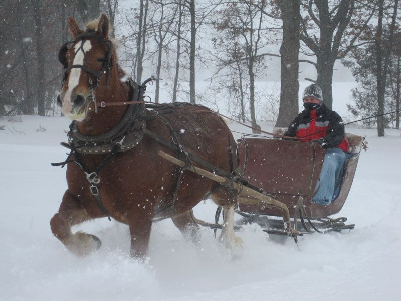 clydesdale horse pulling sleigh horses pinterest clydesdale
