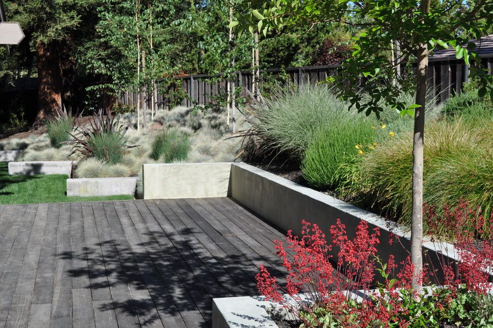 industrial modern cabin landscaping | awesome blue fescue