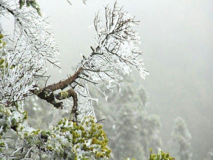 太美的雪景,就在合歡山