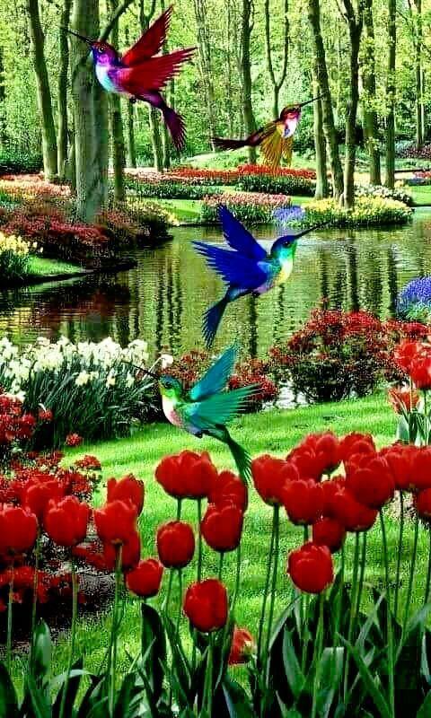 Pássaros sempre nos alegram!!! - #alegram #nos #Pássaros #sempre