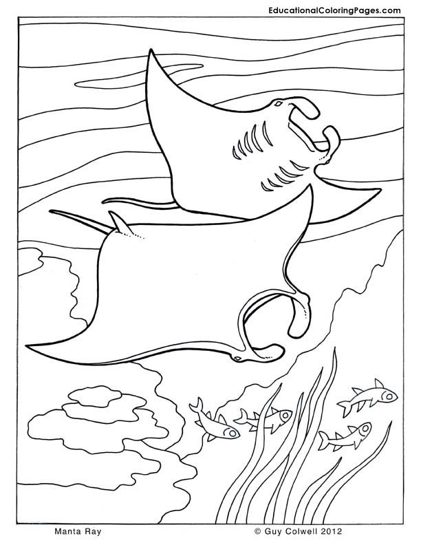 Coloring Book Pages Of Fish : Fish coloring sea animals ocean