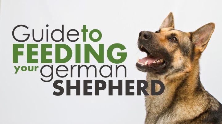 Best dog food for german shepherds top 3 picks 2020