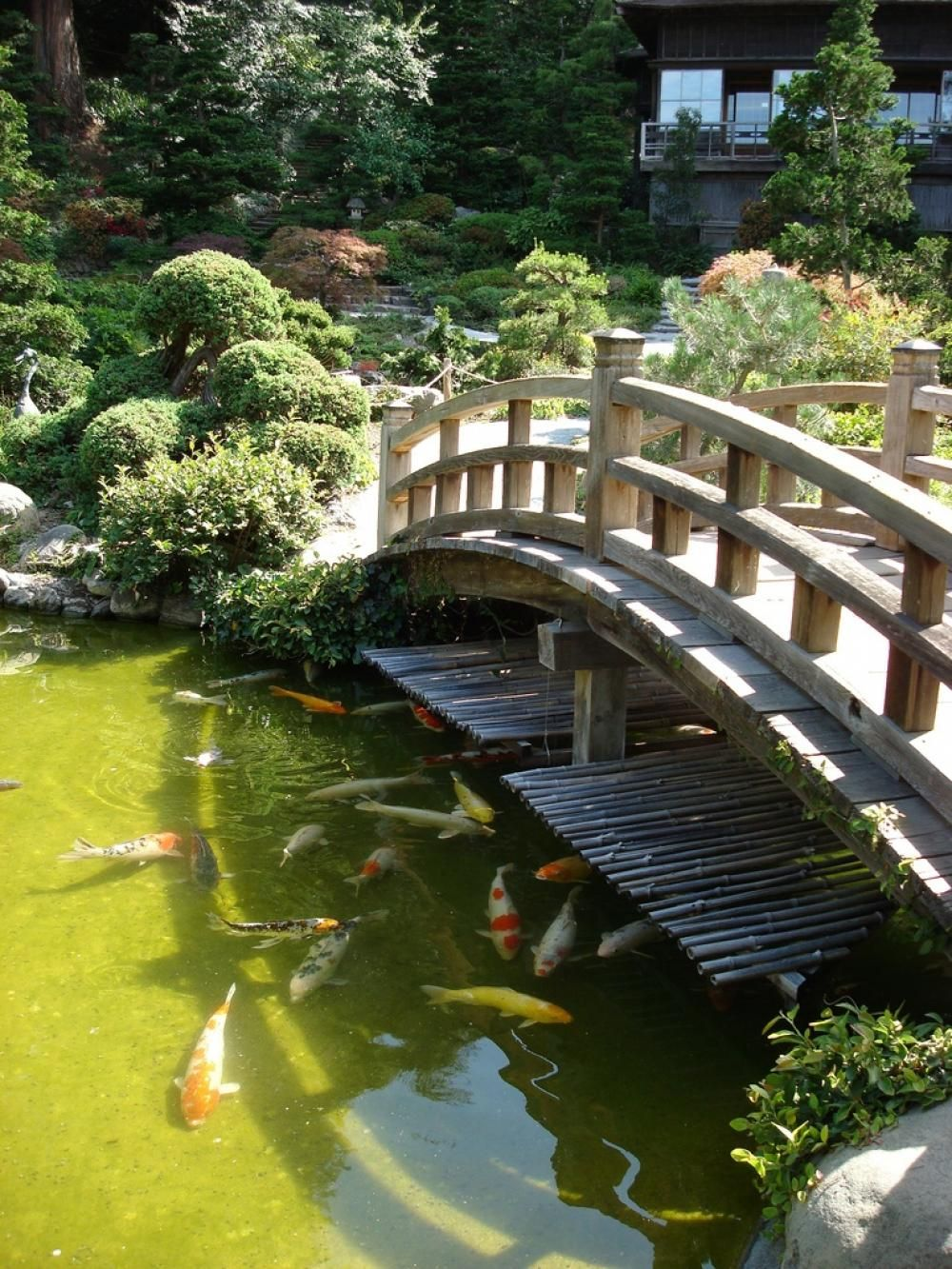Gardening large koi pond with bridge in japanese garden for Koi pool design