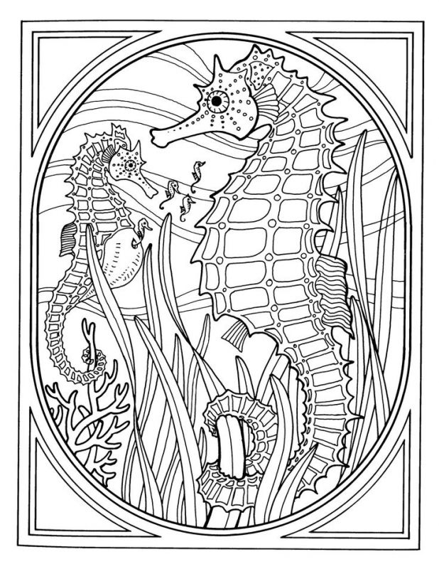 Detailed Realistic Seahorse Hard Coloring Pages For Grown Ups