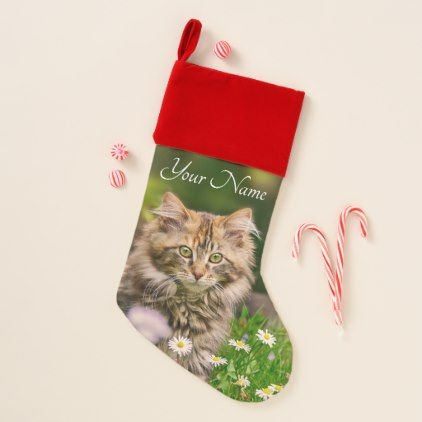 cute fluffy maine coon kitten cat flowers name christmas stocking flowers floral flower design unique style - Christmas Names For Cats