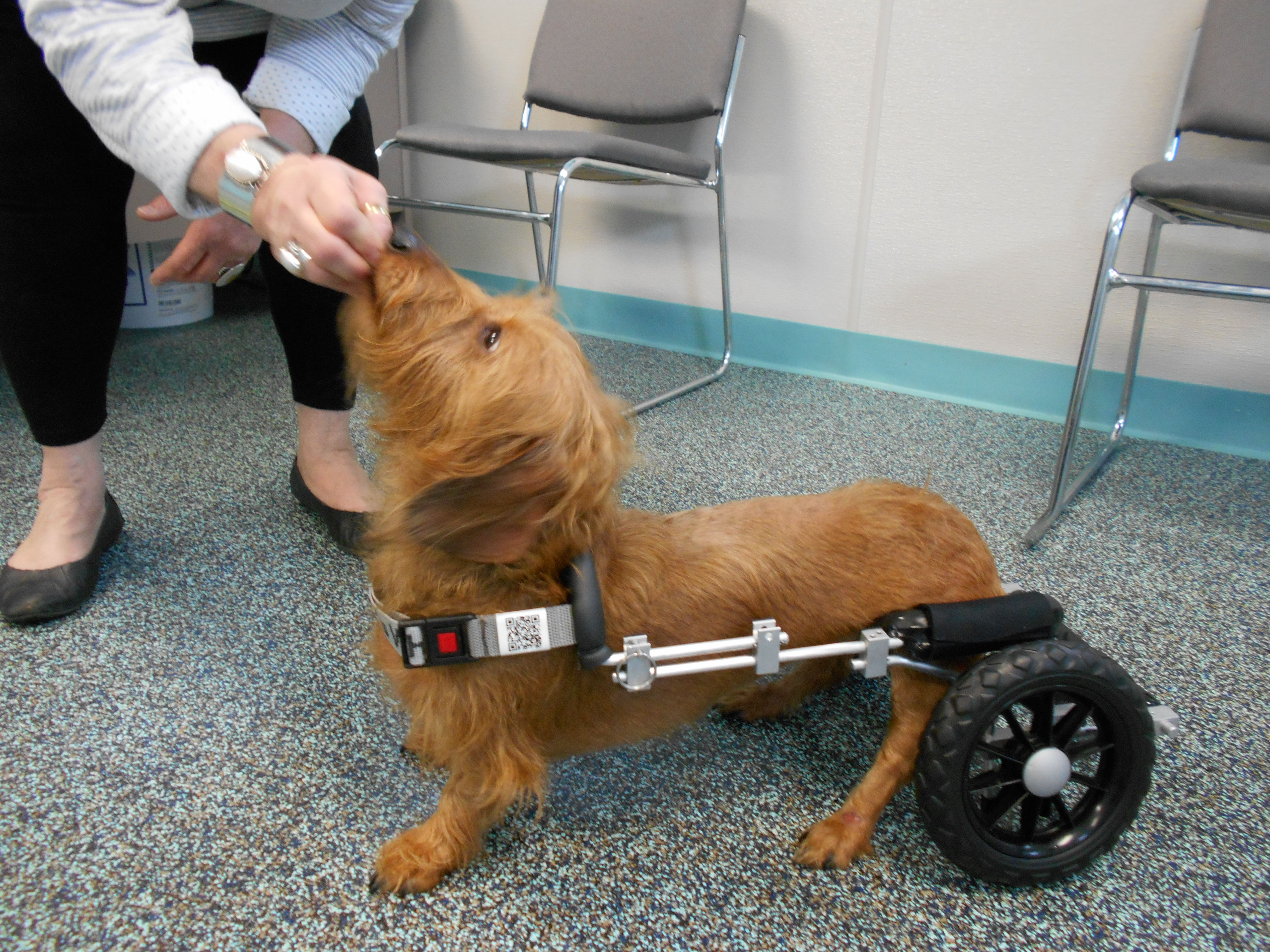 Maia is trying out her new cart from Eddie's Wheels. She