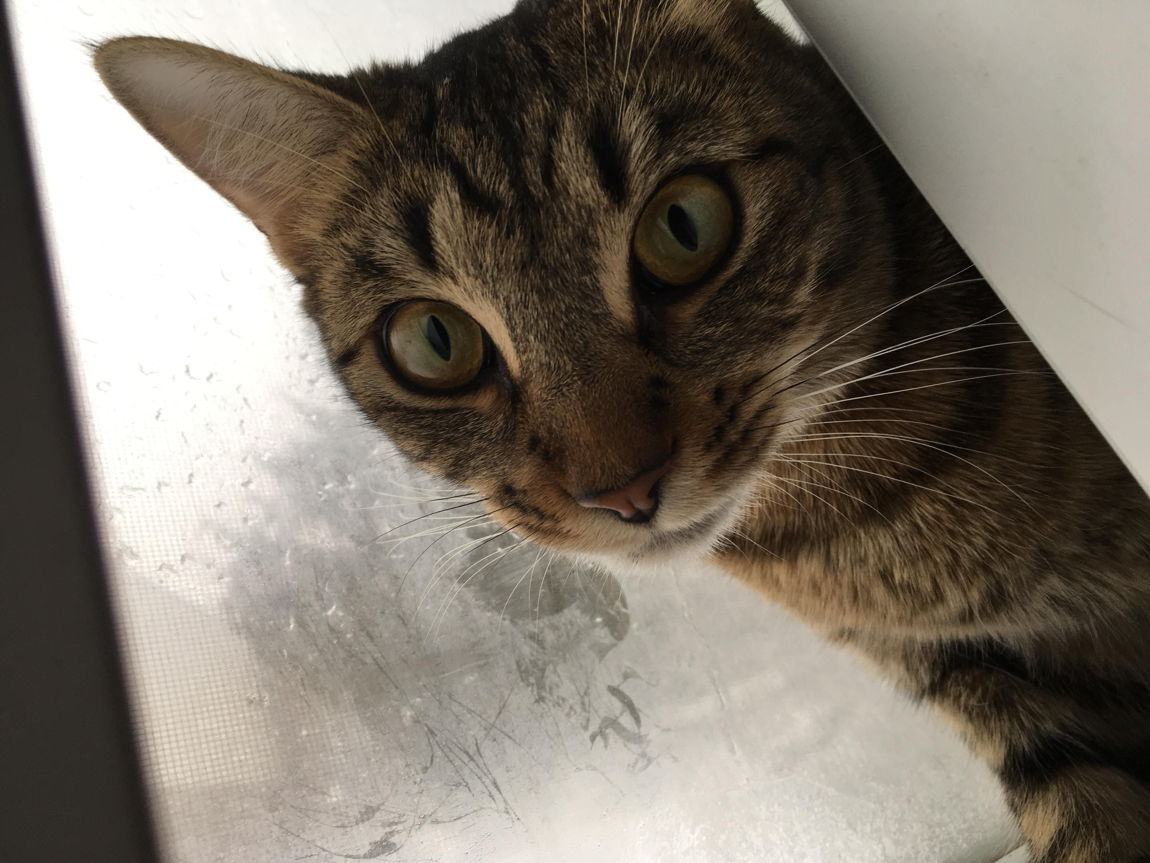 My new cat Remy http://ift.tt/2m69pdd