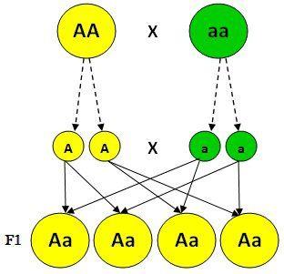 Las Tres Leyes De Mendel Saber Es Práctico Clase De Química Biologia Genetica Estrategias De Enseñanza