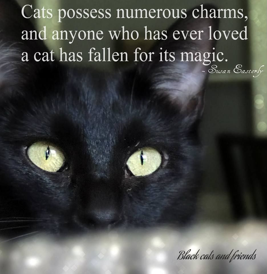 Quotes About Cats Cats Possess Numerous Charms And Anyone Who Has Ever Loved A Cat