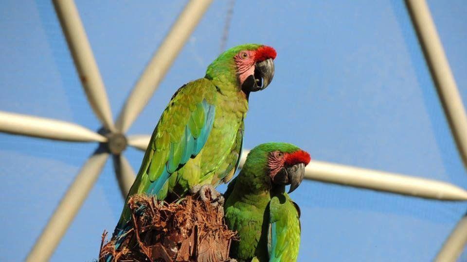 Where are the 1200 birds of ExAviario de Puebla? Profepa, State Park Flor del Bosque?