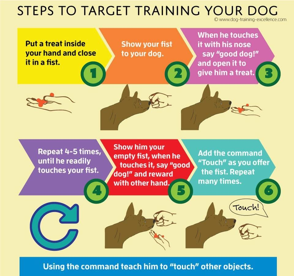 Dog training obedience image by julianne potter on