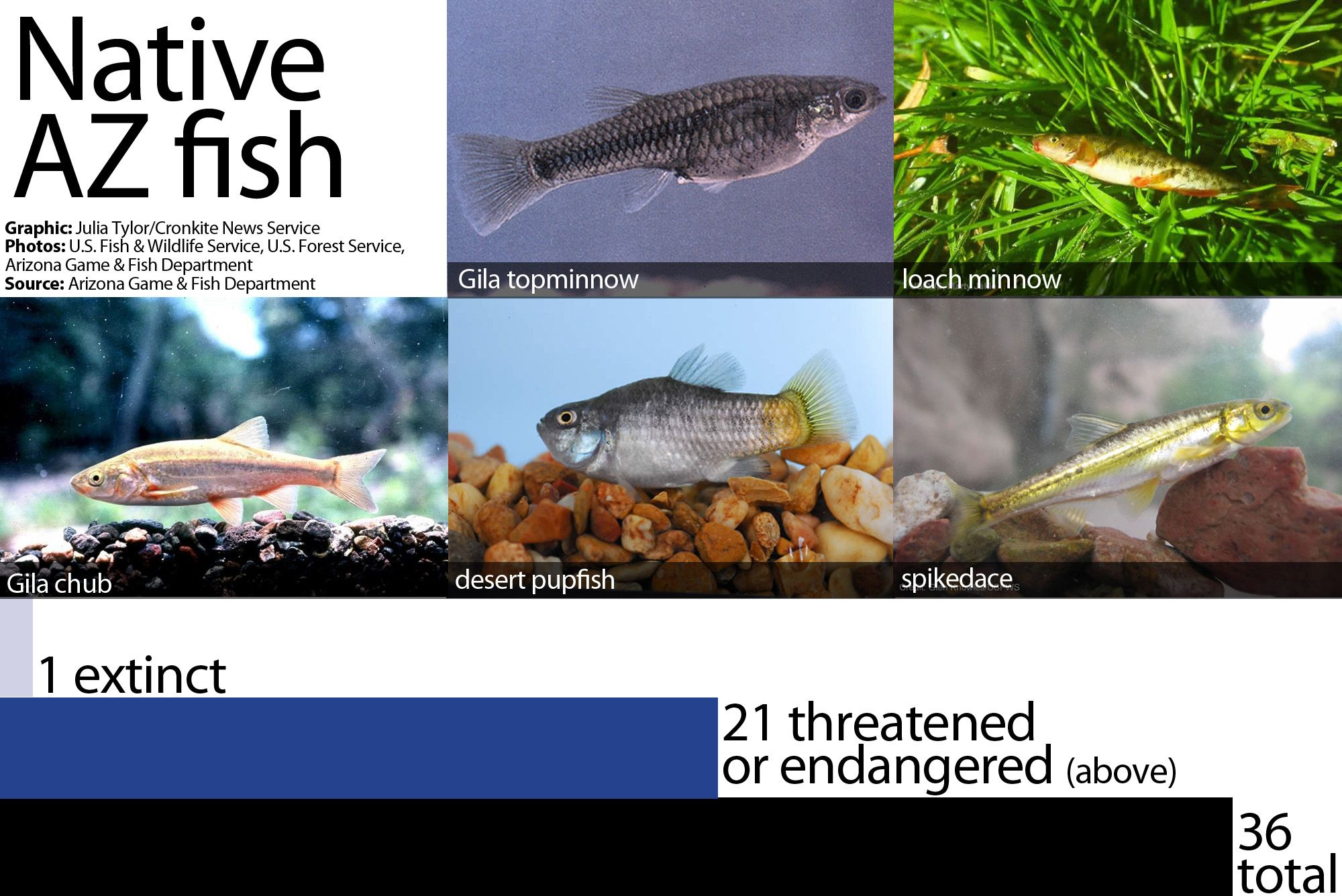 Bid to regulate fish poisons draws fire from environmental groups