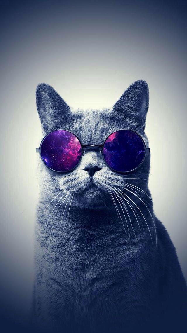 This Cat Is Badass Fond Ecran Iphone 6 Fond Ecran Animaux Fond D Ecran Chat