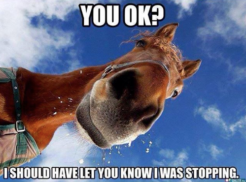 Pin On Horses