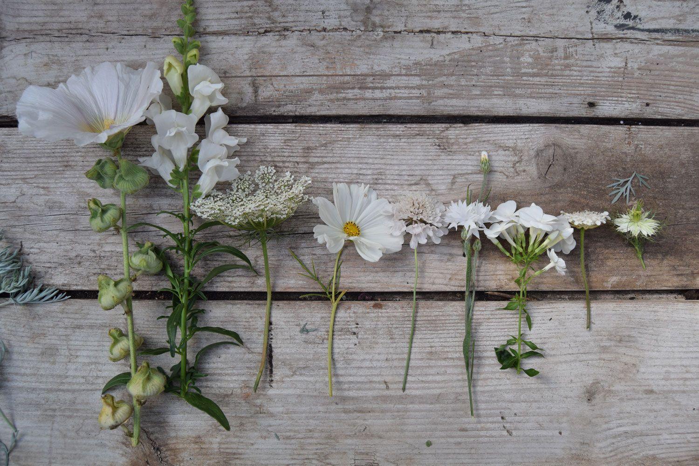 white flower line up Flower farm, British flowers