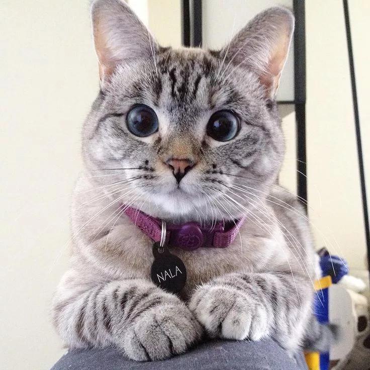 кошка нала инстаграм: 8 тыс изображений найдено в Яндекс ...