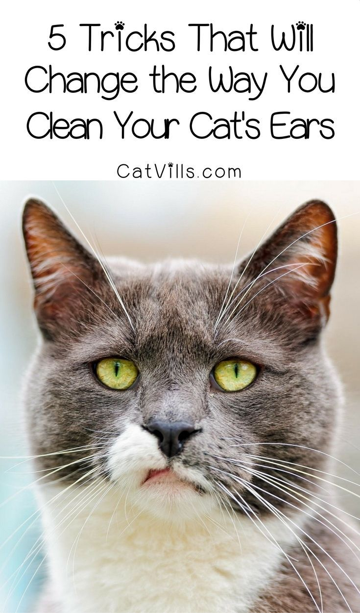 How to clean cat ears 5 tricks that will make it easy
