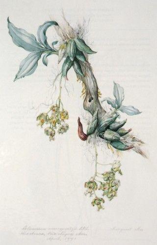 Margaret Mee Botanica Pinterest