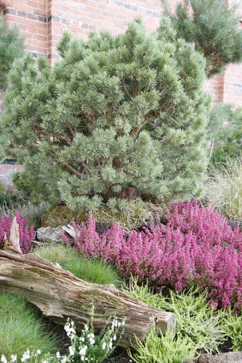 Heidegarten tipps zur gestaltung und pflege heidegarten for Tipps zur gartengestaltung