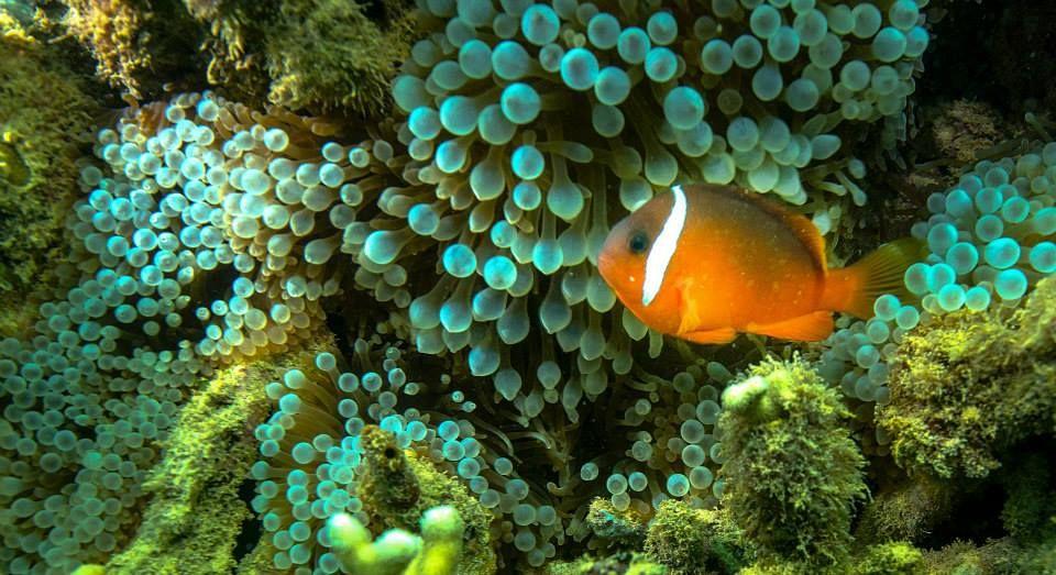 Diver's trip to Beqa Lagoon Resort