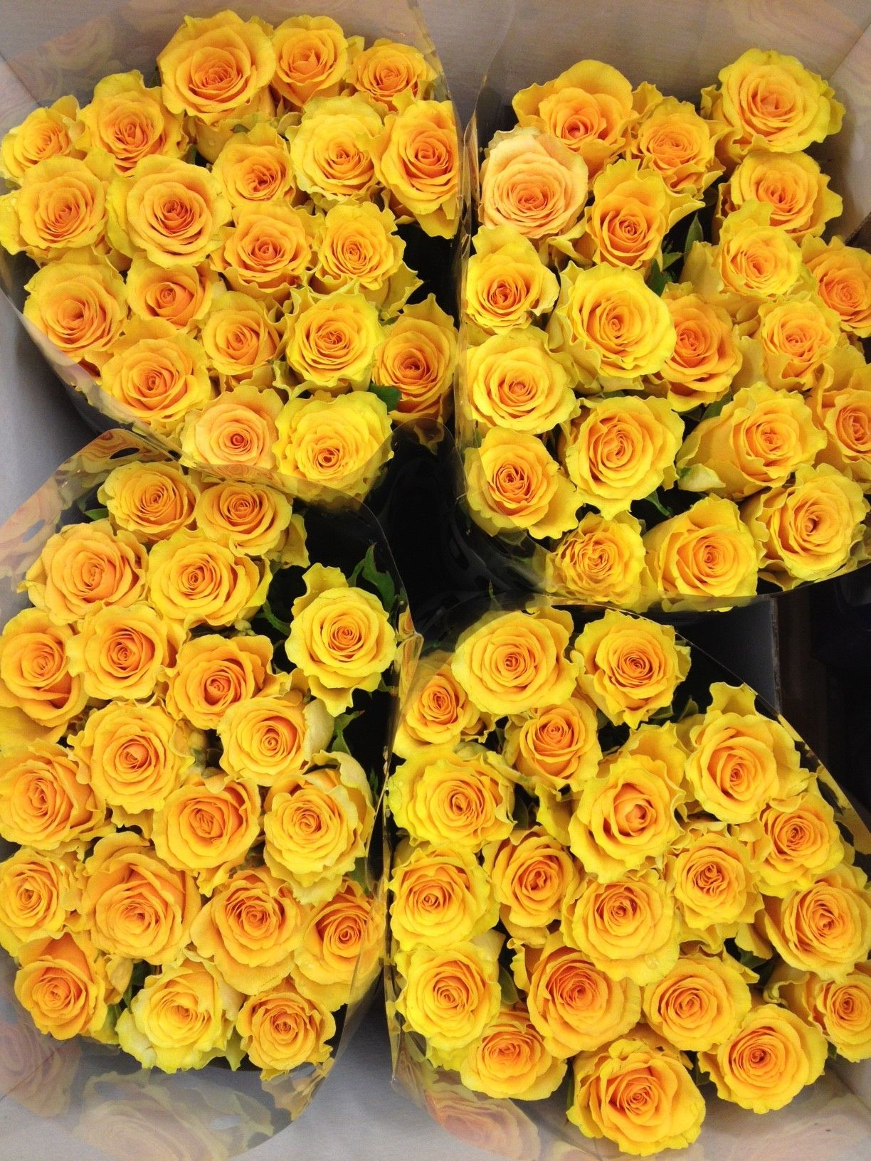 Home bulk roses peach roses - Bucket Of Sphinx Gold Roses Sold In Bunches Of 20 Stems From The Flowermonger The Wholesale Floral Home Delivery Service