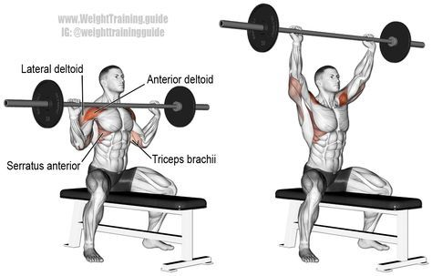 Seated Barbell Overhead Press Guide And Video Shoulder