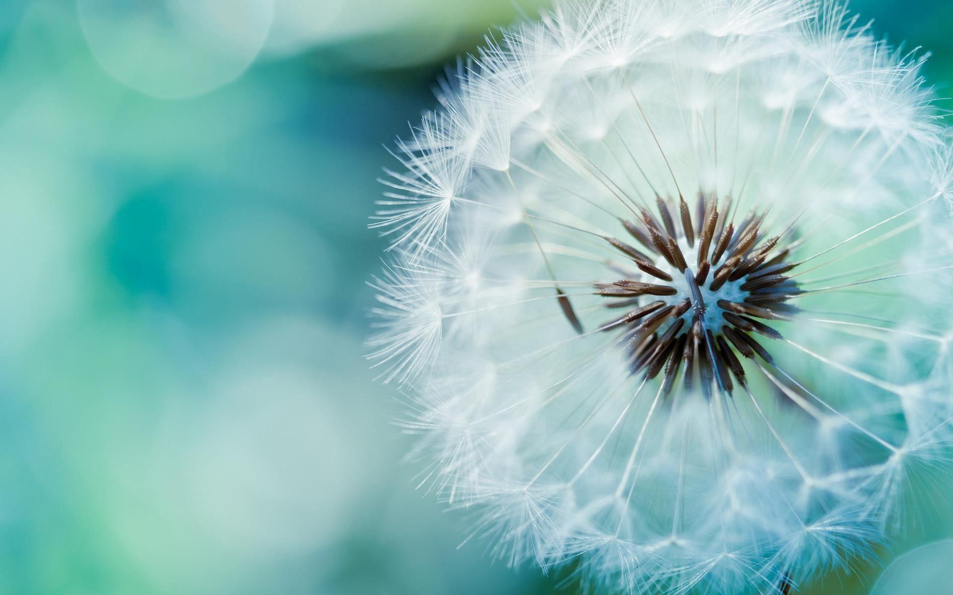 Fond cran image hd nature plante semence fleur wallpaper for Image nature hd gratuit